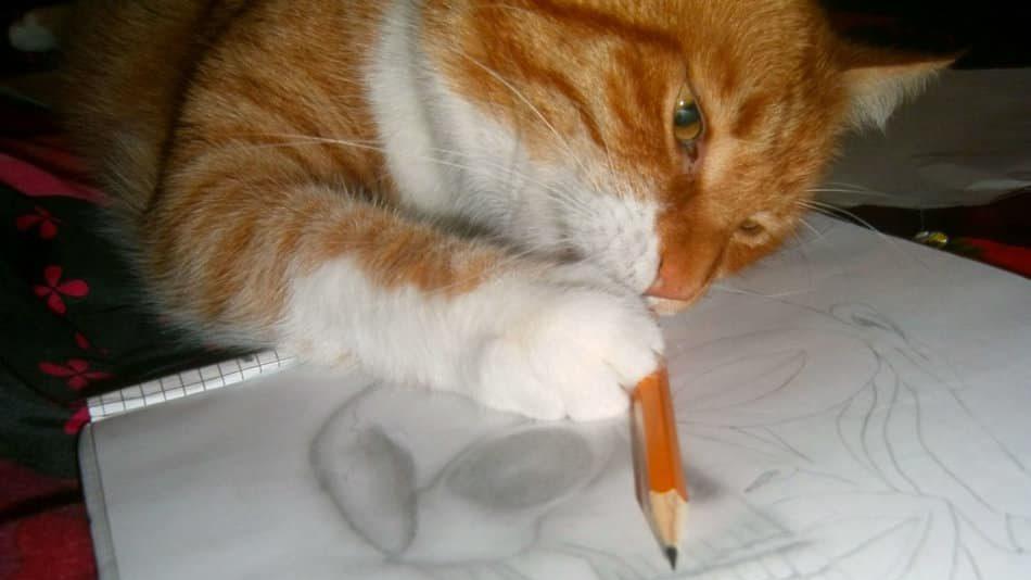 katze-beim-zeichnen-spielzeug-selbstbeschäftigung