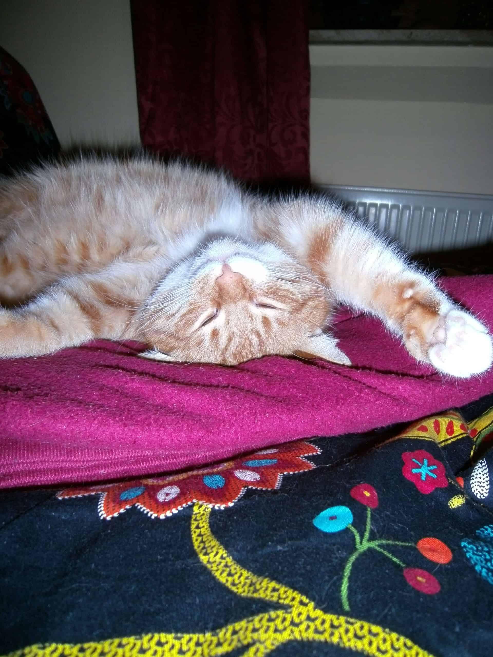 katze-schlafen-und-spielen-ausruhen